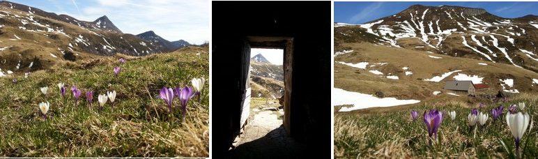 Séjour à l'Enclos du Puy Mary au Printemps