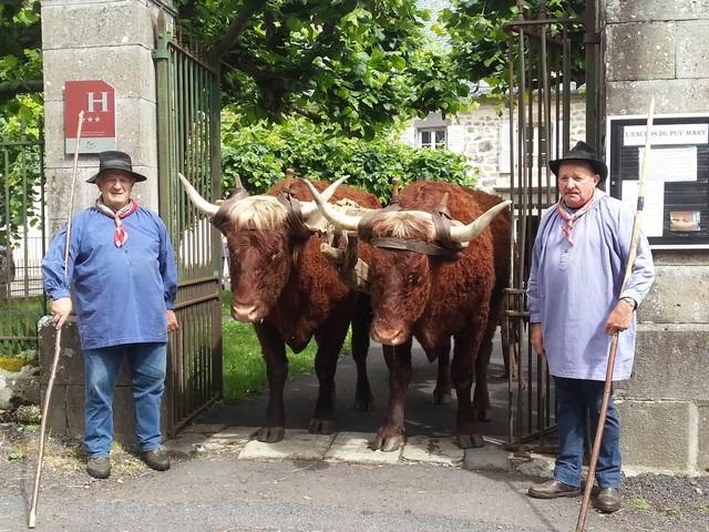 Pierrot Parra et ses Bœufs à l'Enclos du puy Mary