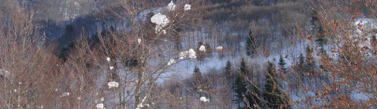 La hêtraie en hiver à Mandailles